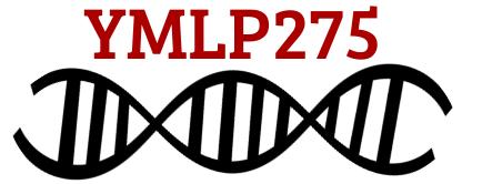 YMLP275, l'actu de votre quotidien !